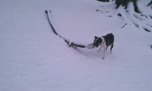 Big Snow Stick