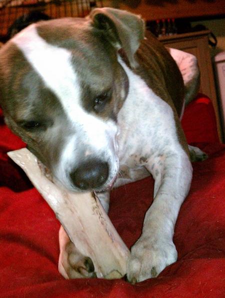 Gots a bone